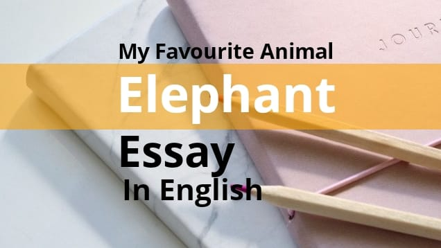 My Favourite Animal Essay Elephant